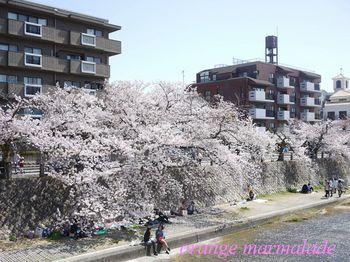 P10500410001芦屋桜1.jpg